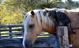 Horse-and-cat