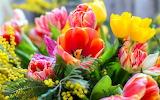 Beautiful Spring Flowers 1