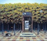 Orange grove Yerka 1