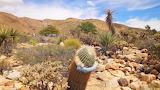 06354f26-fb11-473d-adb6-aca759935cc9-suicide cactus