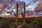 Sunset Sonoran Desert