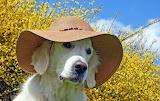 Dog, animal, hat, yellow flowers, spring