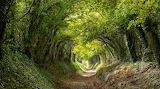 Halnaker Trail, West Sussex