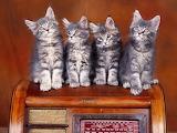 Four kittens on the radio