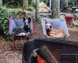 Dogs camping trip