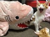 Help, Shark Attack !