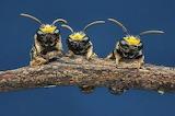 Science myfrogcroaked beesjpg