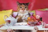 Kitty Tea Time