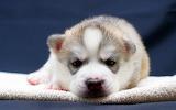 ☺ Cute puppy...
