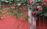 ☺ Red wall...