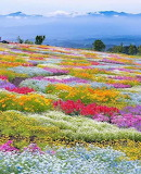 Carpet of wildflowers