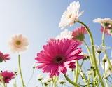 Treee Flowerssss