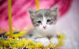 Kitten baby, basket, cat, Easter, wallpaper