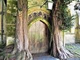Trees growing on entrance to St. Edward's church Stow-on-the-Wol