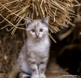 Meet the new mouse chaser kitten at the farm
