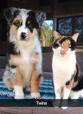 Twins cat and dog