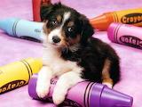 Crayon Pup...