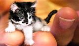 #Teeny Kitty