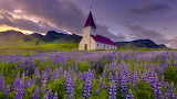 Church in Lupines