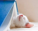 ☺Tired of Reading... (∪。∪)。。。zzz