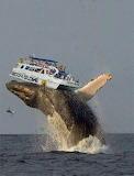 Whale-under-tourist-boat