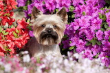 Dog-and-flowers