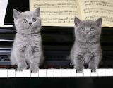 Meowy Mozart Duet