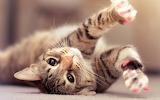 playful-cats