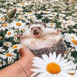 Happy Little Buddy