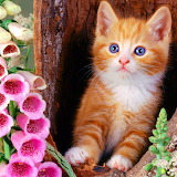 Ginger Kitty...