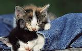 Cute-Kittens-kittens-16123202-1280-800