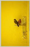 2 Birdz Perched on a Key