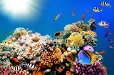 #Underwater World