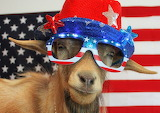 4th Goat