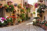 geraniums and cobblestones
