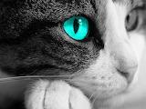 Animal-cat-eye