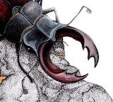 "Science scientificillustration ""Stag Beetle"" Laurawilliams-illus"