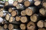 Drewno na zimę