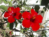 red flowers