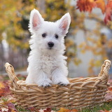 Puppy in a Basket...