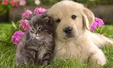 Cadell - Puppy