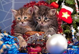 Christmas Kitties @ 1zoom.me....