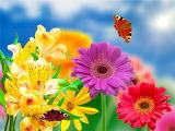 Summer Blooms @ Pinterest...