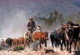 John Wayne - cattle drive
