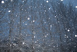 Snowfall on trees at night by Mandy Ann Denison