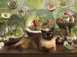 Terrarium-cat