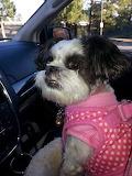 Miss Bella in Flagstaff