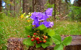 Flowers, strawberries, berries, bells, greens, trees, nature, tr
