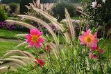 Jardin de Chenonceau
