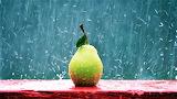 #Rainy Day Pear
